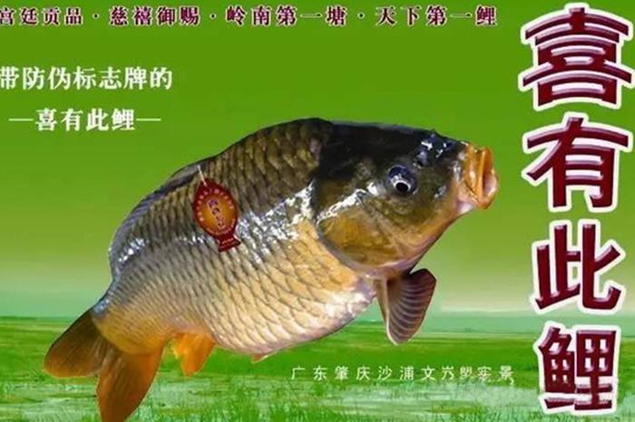 文塱文庆鲤鱼干